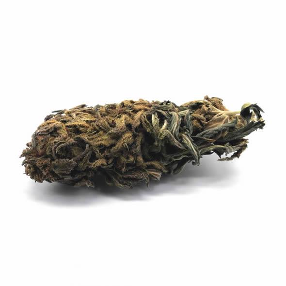 Charlotte's Web - Cannabis sativa CBD 8G